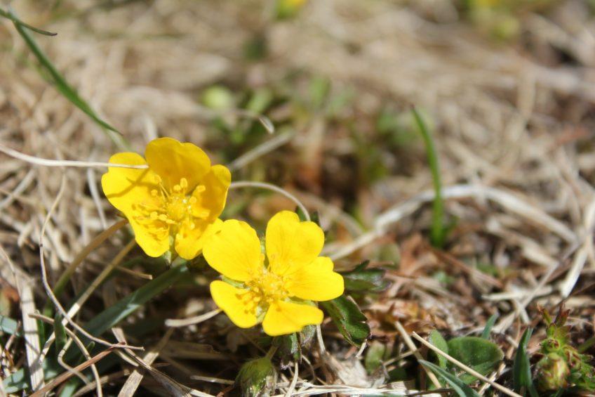 Frühling, Sommer in Südtirol, Urlaub Südtirol
